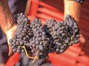 Şi o veste bună: Vinurile roşii arată un potenţial extraordinar. 2020 va intra în rândul anilor de referinţă din punctul de vedere al calităţii