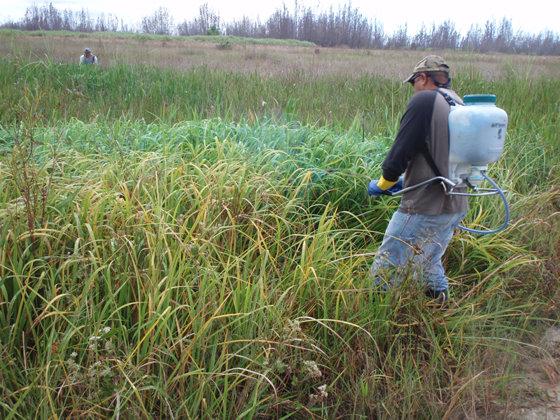 Imaginea articolului România, singura ţară din Europa Centrală care produce erbicide cu toxicitate redusă