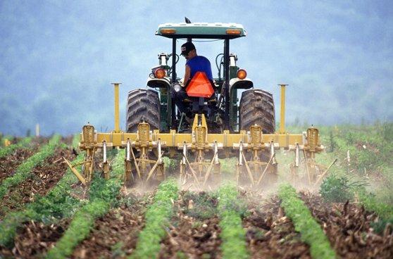 Imaginea articolului Adrian Oros: În agricultură există vânători de subvenţii