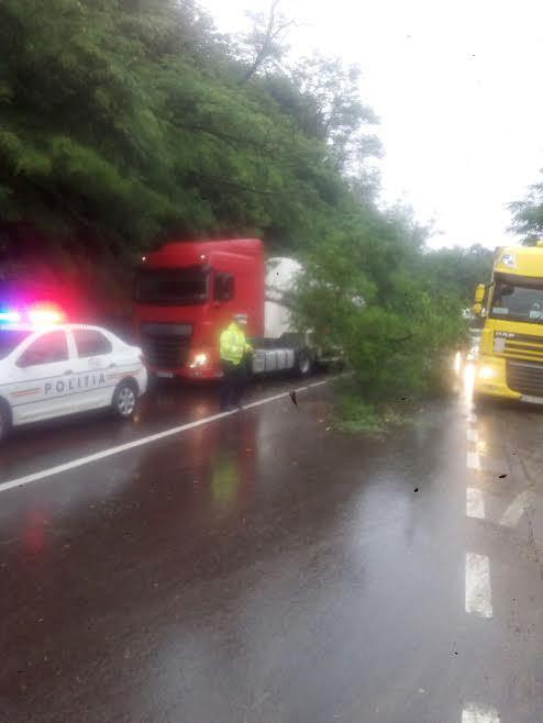 FOTO | Argeş: Gospodării inundate, copaci căzuţi peste maşini şi drumuri blocate, după furtună