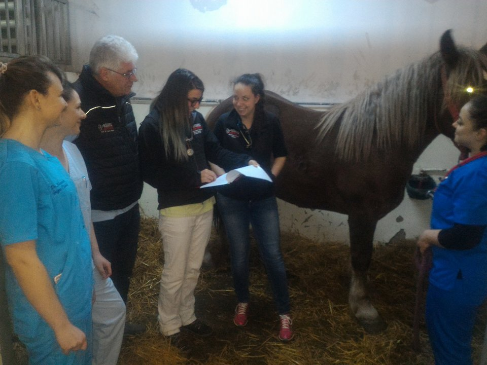 tratament comun pentru cai