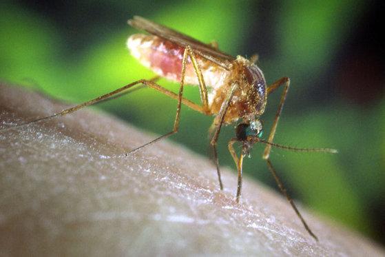 Imaginea articolului Un bărbat din judeţul Alba a murit în urma infecţiei cu virusul West Nile. Numărul deceselor din ţară a ajuns la 22