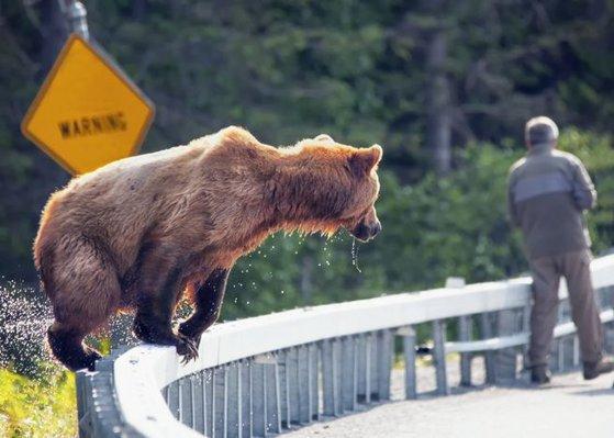 Imaginea articolului Vânătoare sfârşită prost. Un bărbat, muşcat de cap de un urs, se află în stare critică. Animalul a fost ucis