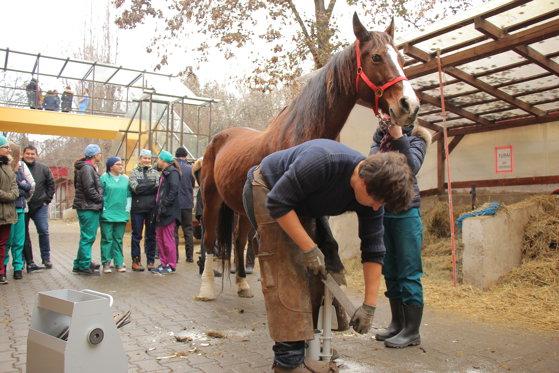 Imaginea articolului INEDIT: O şcoală de potcovit cai, după model francez, a fost deschisă la Cluj