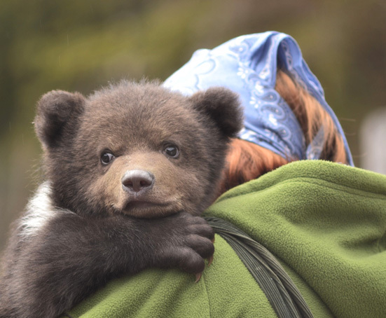 Pui de urs rămas captiv în apropierea gării din Băile Tuşnad, eliberat de către jandarmi   VIDEO