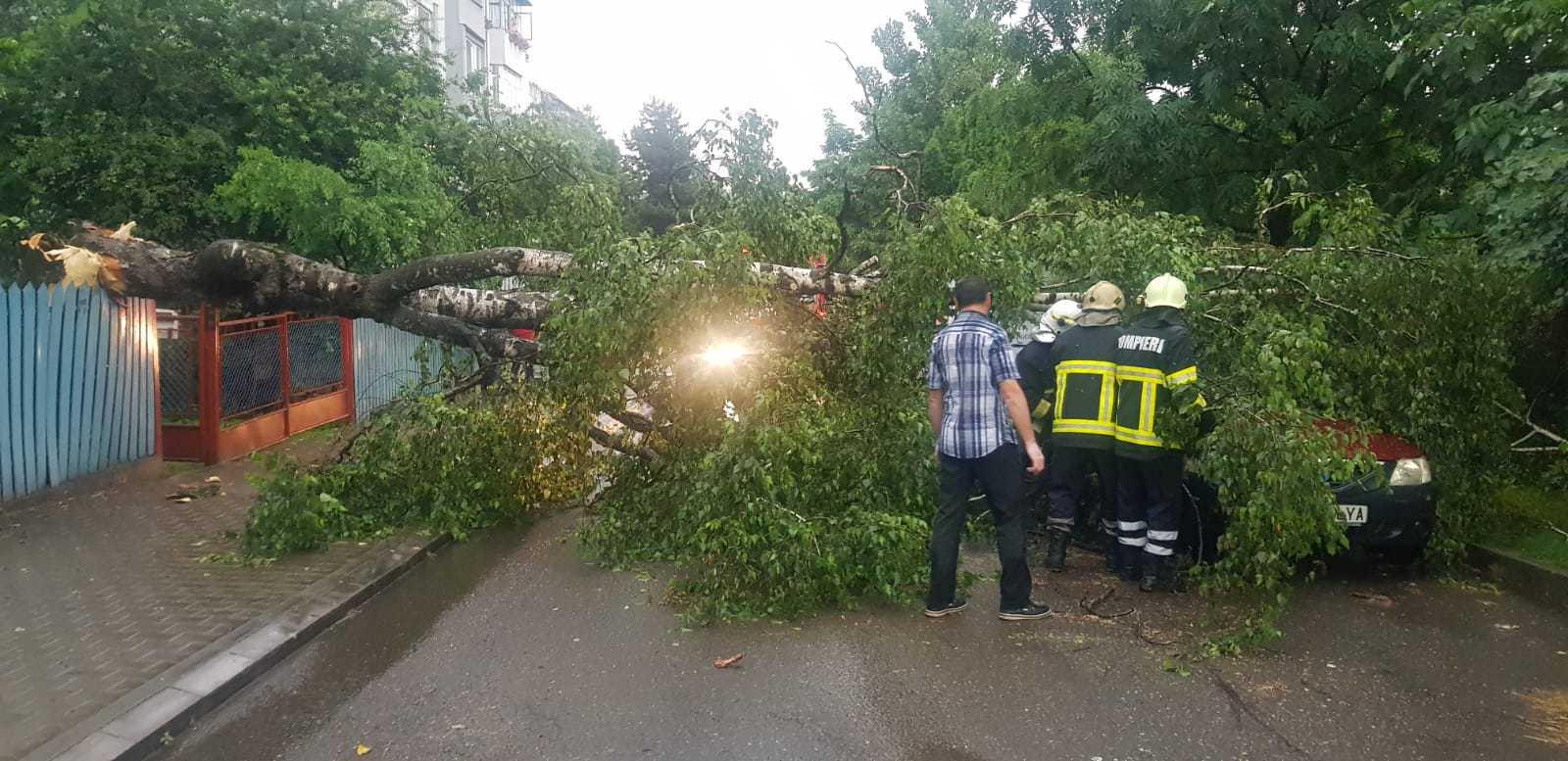 Ploile torenţiale au făcut ravagii în ţară: Drum naţional, închis. Zeci de case şi anexe, inundate/ Vijeliile au doborât mai mulţi copaci pe carosabil, iar două maşini au fost avariate | FOTO, VIDEO