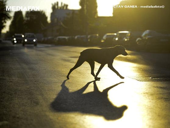 Imaginea articolului Incident GRAV: Mai mulţi tineri au fost atacaţi de un câine agresiv. Stăpânul animalului era beat