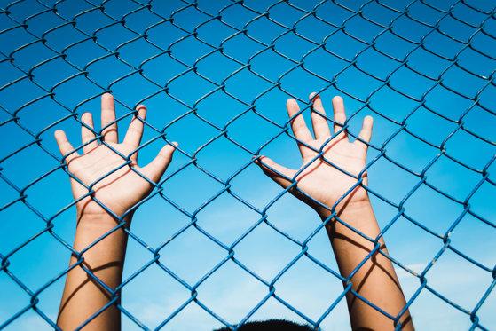 Imaginea articolului Asociaţia Salvaţi Copiii, despre cazul de sclavie din Maramureş: Primăria trebuia să monitorizeze atent activitatea minorilor