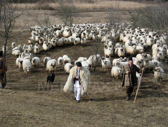 Imaginea articolului Caz teribil la o stână din Dolj: Un cioban ar fi fost ucis în bătăie de un coleg de breaslă
