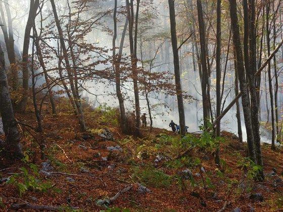 Imaginea articolului Incendii de vegetaţie în Hunedoara: Peste 15 hectare de pădure au fost afectate - FOTO