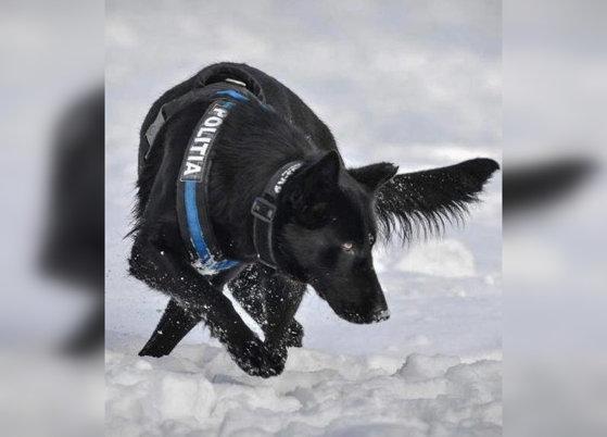 Imaginea articolului Ministerul de Interne îi mulţumeşte câinelui poliţist care a găsit suspectul în cazul crimelor din Satu Mare. Teba nu este la primul mare succes