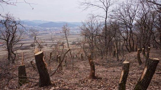 Imaginea articolului Un primar vrea să-i filmeze pe cei care taie pădurile: Jaful trebuie oprit
