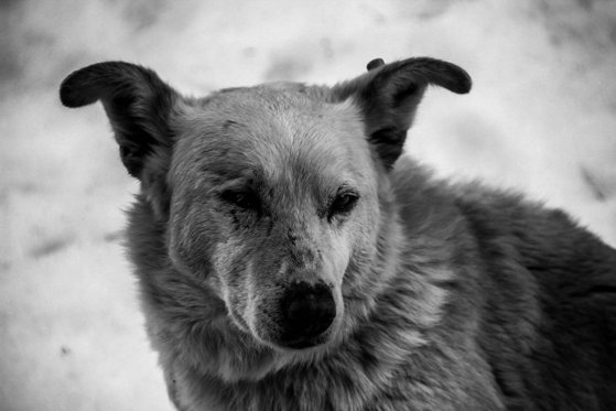 Imaginea articolului Val de violenţe împotriva animalelor. Un bărbat a spânzurat un câine ca să se răzbune pe concubină / Poliţia a deschis o anchetă