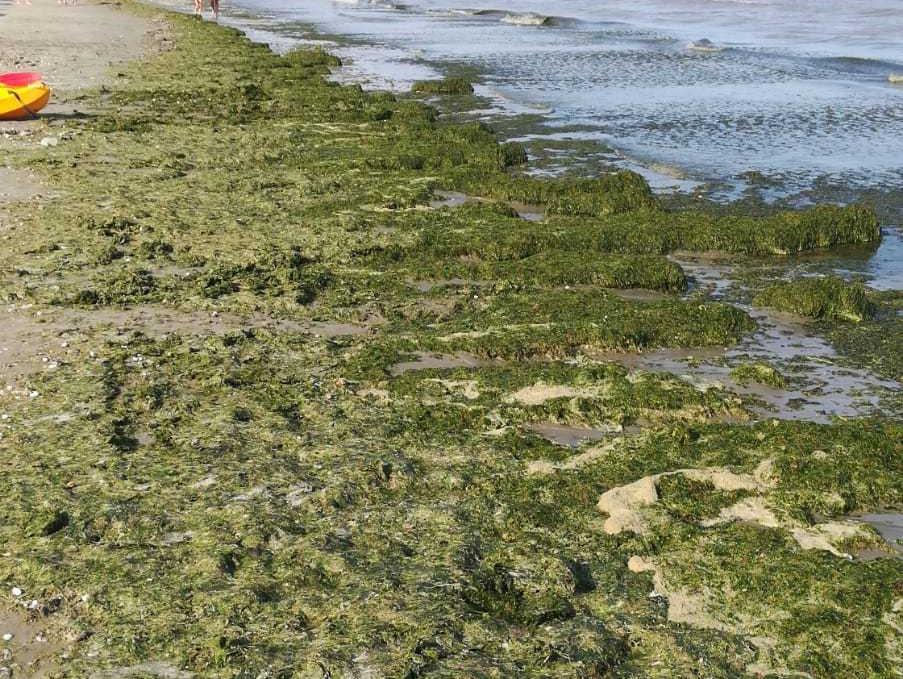 Constanţa: Aproape 3.000 de tone de alge, adunate de pe plaje în prima jumătate a lunii iulie