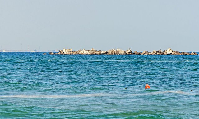 Descoperire uimitoare în Marea Neagră. O specie rară din Pacific a fost gsit pe malul mării noastre. Explicaţiile specialiştilor|EpicNews