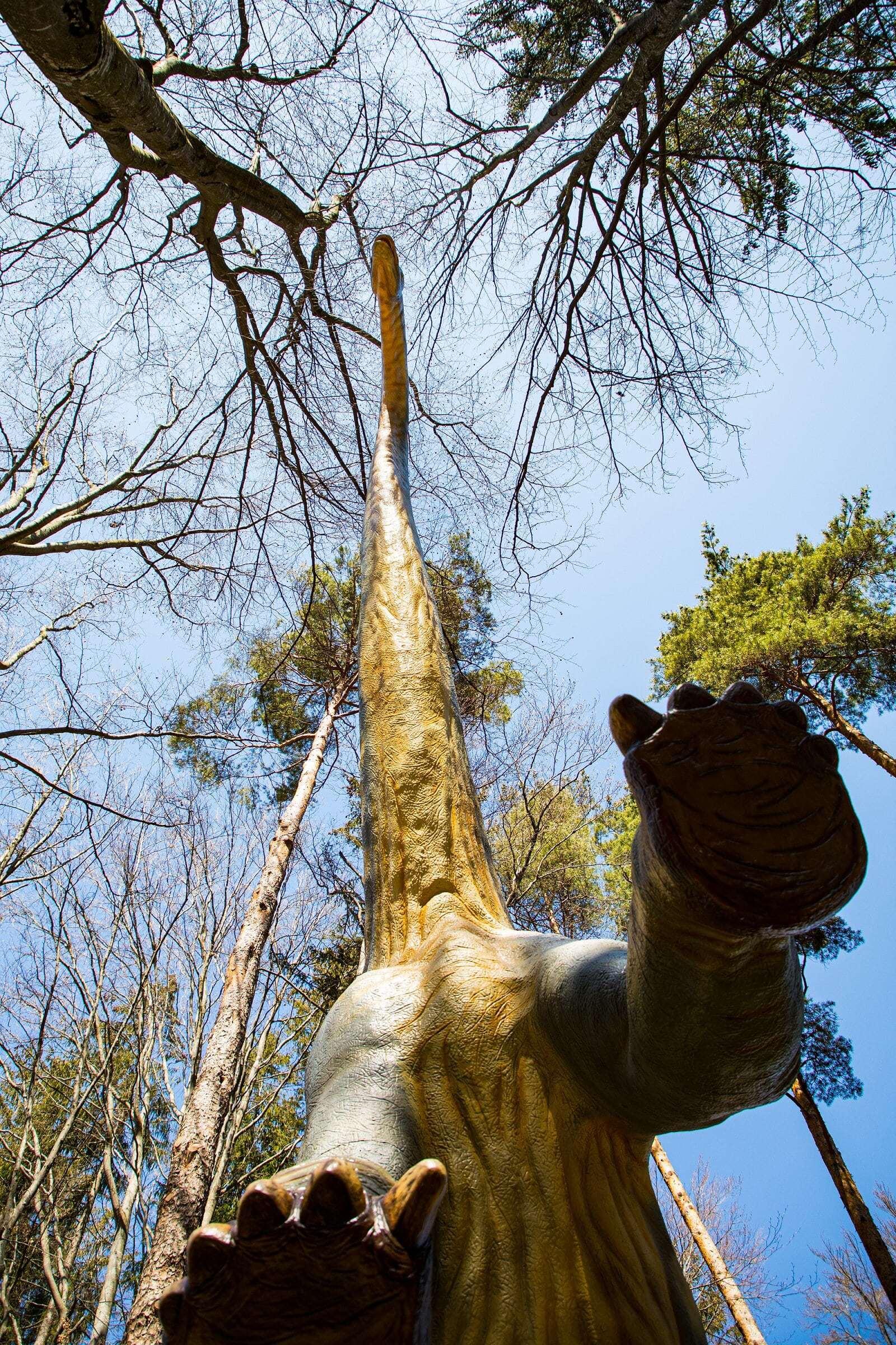 Cel mai înalt dinozaur din sud-estul Europei se află la Râşnov. Este cât două girafe suprapuse