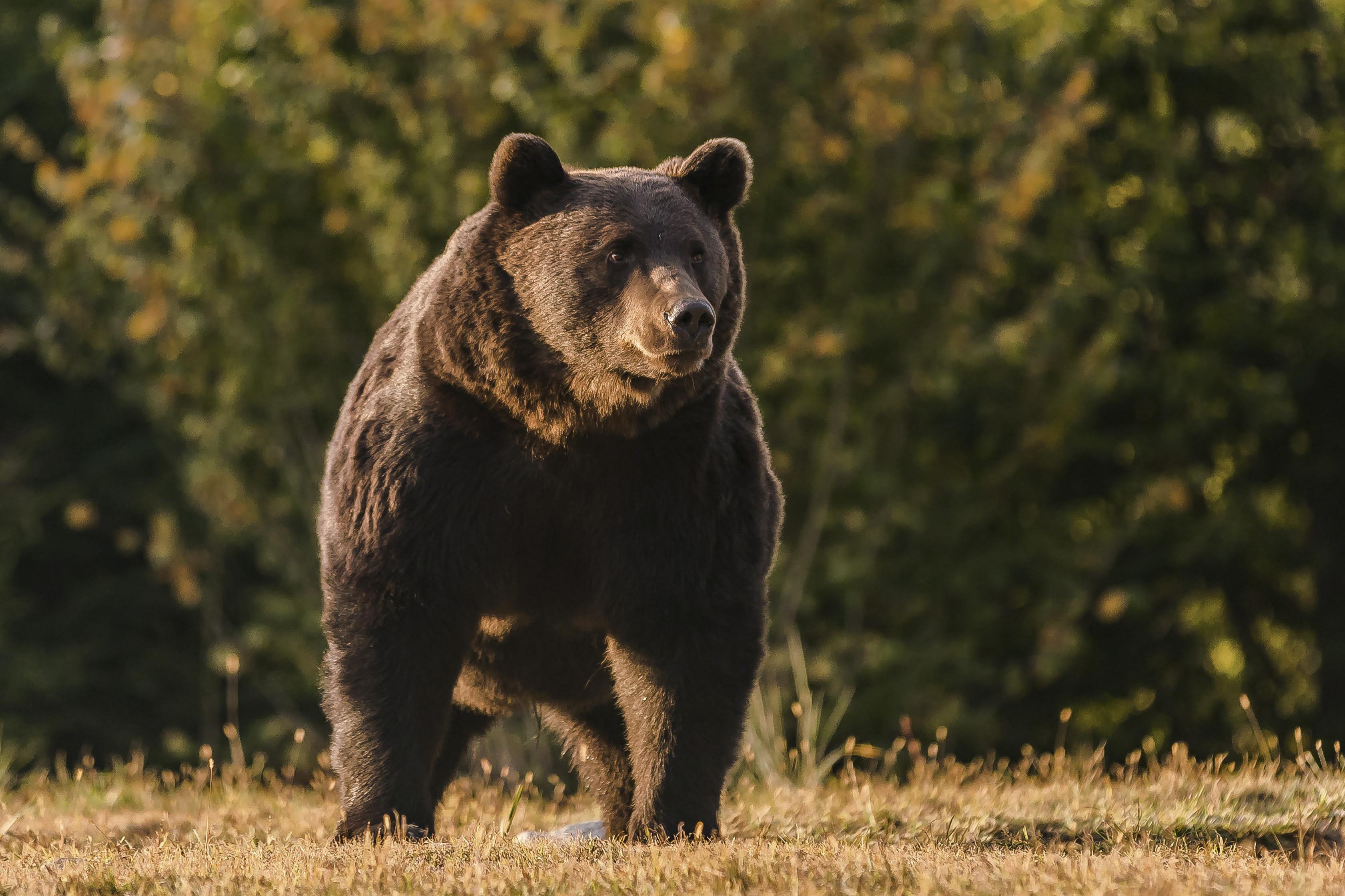 Prinţul Emanuel von and zu Liechtenstein, contrazis de activiştii români: l-a ucis pe Arthur, nu o ursoaică(...)
