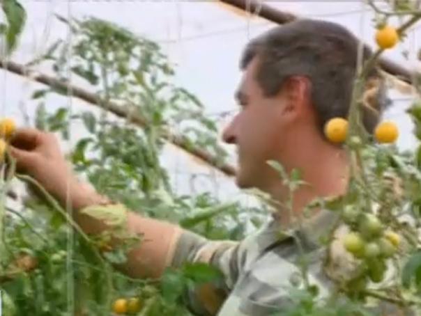 Criză de muncitori în Ungaria. Serele de fructe şi de legume s-ar putea închide
