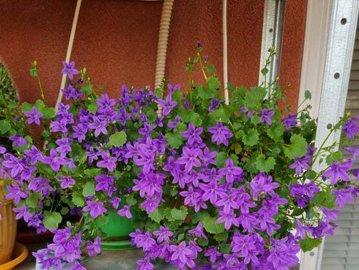 Cum te ajută plantele de interior să fii sănătos? Ce flori au românii în case Galerie FOTO