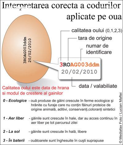 Două treimi din ouăle produse în România sunt de la găini crescute în baterii (Infografic: Lucian Maftei/Mediafax Foto)