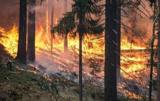 Imaginea articolului Incendii puternice de vegetaţie în Portugalia. S-a decis mobilizarea armatei pentru a ajuta la stingerea focului