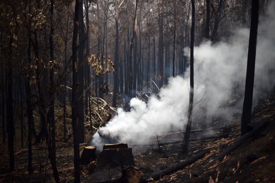 Imaginea articolului Peste 180 de oameni au fost arestaţi în Australia, acuzaţi că au provocat incendii. Dintre aceştia, 67 sunt minori