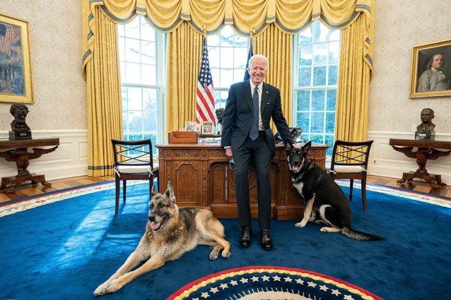 Câinii lui Joe Biden au fost daţi afară de la Casa Albă, după ce Major ar fi atacat un membru al echipei de securitate|EpicNews