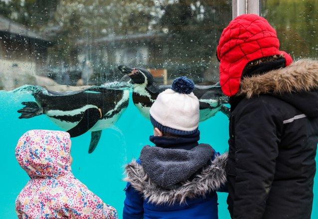 Prima zi după lockdown în Marea Britanie. Grădina zoologică din Londra şi-a redeschis porţile|EpicNews