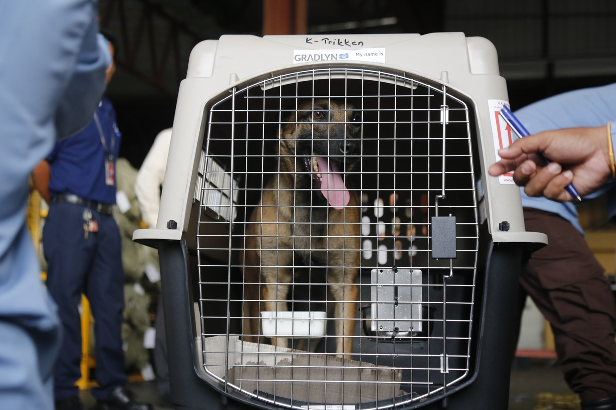 Statele Unite ale Americii interzic importurile de câini din peste 100 de ţări. Motivul invocat de Centrul pentru Controlul şi Prevenirea Bolilor