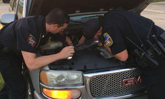 Imaginea articolului O femeie, al cărui automobil se comporta ciudat, a făcut o descoperire TERIFIANTĂ sub capotă | FOTO