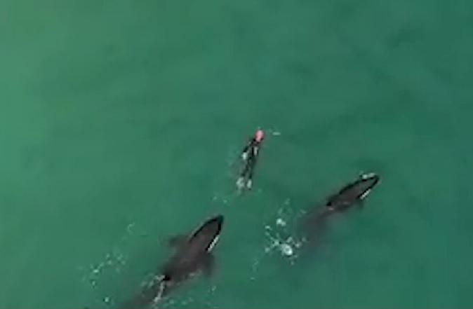 IMAGINILE ZILEI: O femeie din Noua Zeelandă s-a trezit însoţită la înot de trei balene ucigaşe