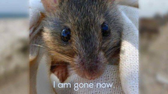 Imaginea articolului Anunţ trist al guvernului australian: Este oficial - primul mamifer dispărut din cauza schimbărilor climatice provocate de om