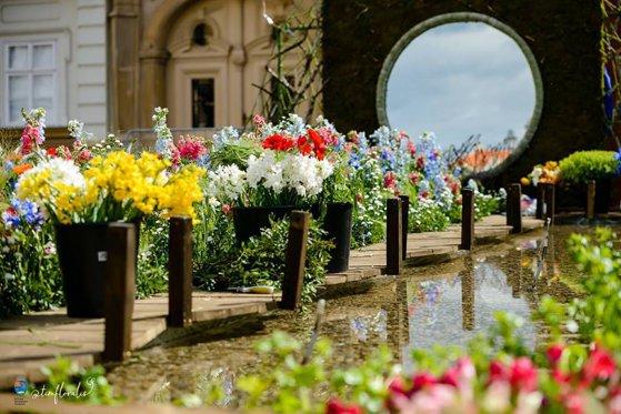 Imaginea articolului Ghiveci inteligent, inventat de un licean: Udă singur florile cu apa din umiditatea aerului   FOTO