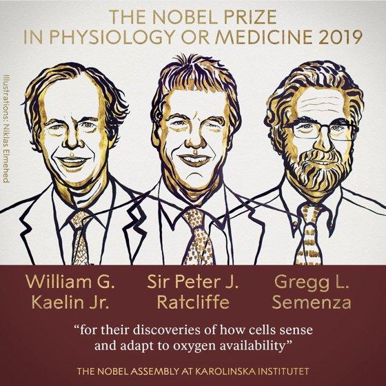 Imaginea articolului Oamenii de ştiinţă Gregg L. Semenza, Peter J.Ratcliffe şi William G.Kaelin sunt laureaţii Nobel pentru medicină 2019