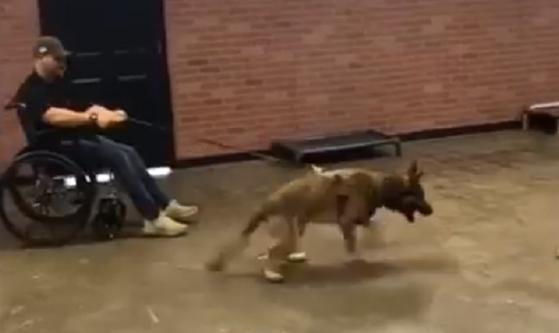 Imaginea articolului VIRAL. Cum a picat ciobănescul german Ryker cu brio testele pentru a deveni câine ajutător pentru persoanele cu dizabilităţi
