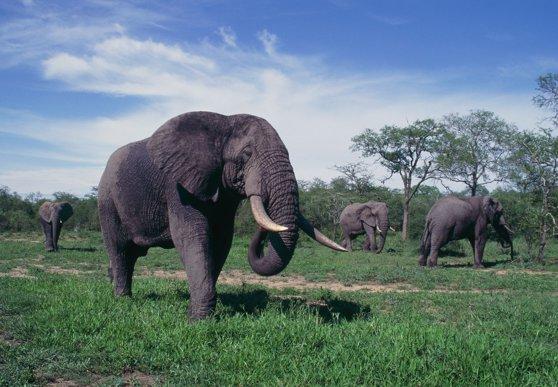 Imaginea articolului Avertisment ONU: Omenirea are la dispoziţie 10 ani pentru salvarea biodiversităţii Pământului