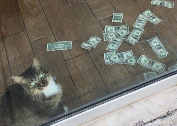 pisica care face bani