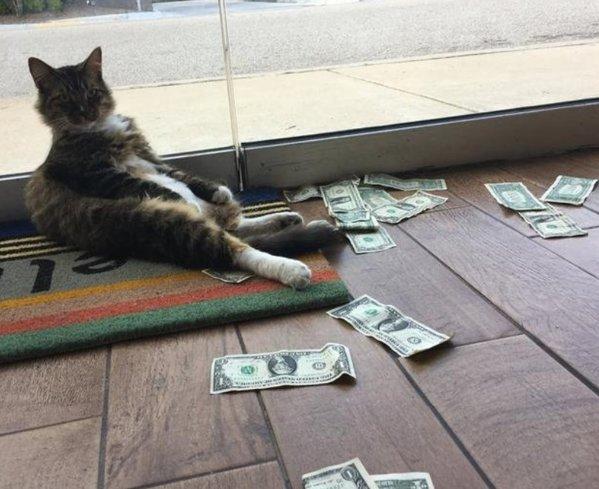 pisica face bani)