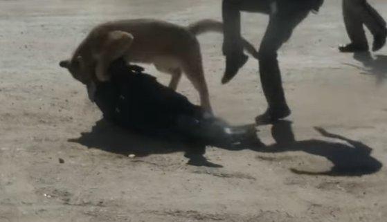 Imaginea articolului VIDEO: Momentul când o femeie, ajutor de şerif, este atacată de o pumă, în SUA