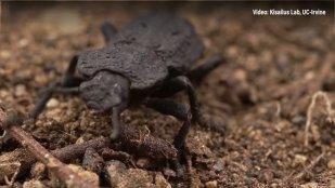 un gândac care nu poate face bani