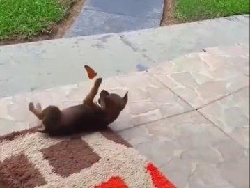 Prietenia între specii. Joaca între un pui de câine şi fluture, într-un video viral adorabil