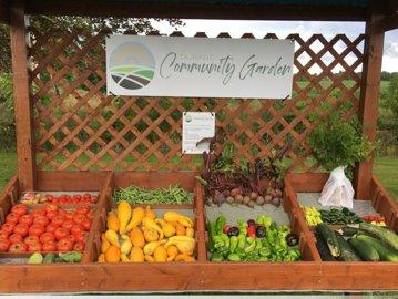 Un oraş mic, dar smart îşi creşte propriile legume şi fructe, iar oamenii le pot culege gratis FOTO VIDEO
