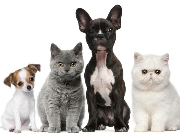 Site- ul de intalnire pentru persoanele care iubesc animalele