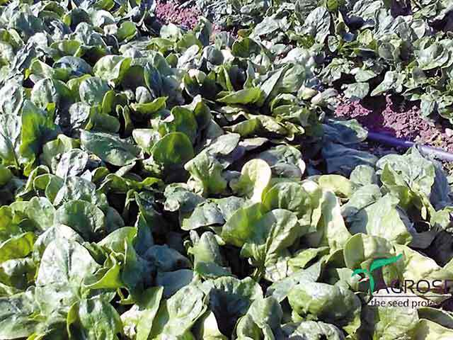 Producătorul de seminţe Agrosel din judeţul Cluj are un buget de investiţii de 1,5 mil. euro