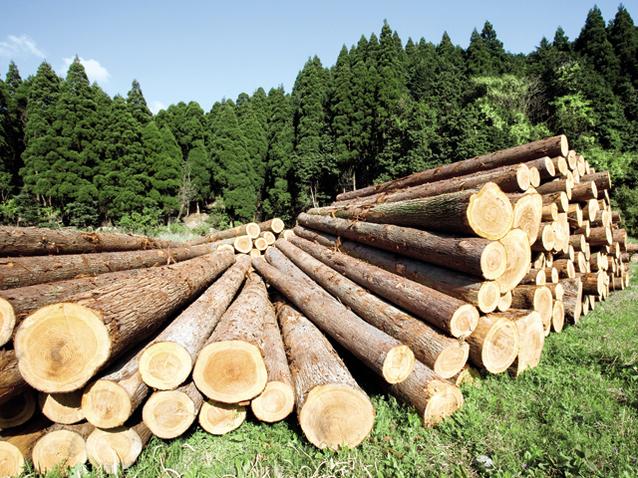 Romsilva, în război cu Greenpeace, după ce activişii au protesat împotriva tăierii unor copaci de peste 180 de ani dintr-o pădure din Prahova
