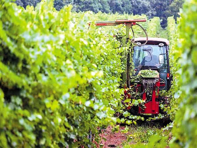 Vinurile cramei Carastelec din Sălaj au ajuns în 200 de restaurante şi magazine specializate