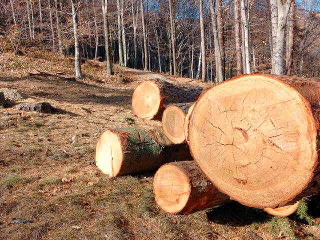 Romsilva, compania care administrează pădurile statului, mizează pe afaceri de 405 milioane de euro în 2017