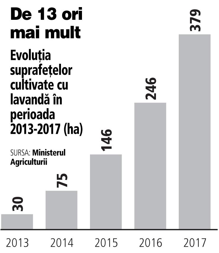Grafic: Evoluţia suprafeţelor cultivate cu lavandă în perioada 2013-2017 (ha)