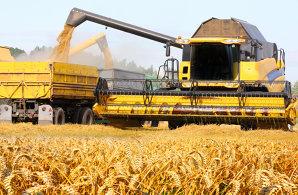 Top 20 producători de cereale după suprafaţa cultivată în 2019: companiile româneşti domină ca număr, dar cea mai mare fermă rămâne Agricost, companie cu capital străin