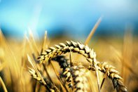Cine vine la videoconferinţa ZF Agricultura într-o nouă etapă: Cum a accelerat anul 2020 digitalizarea agriculturii? Miercuri, 21 octombrie